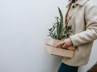 planten verhuizen